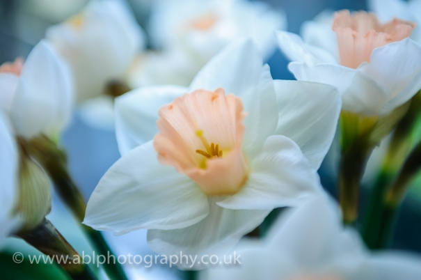 flowers by ABL Photography-3389